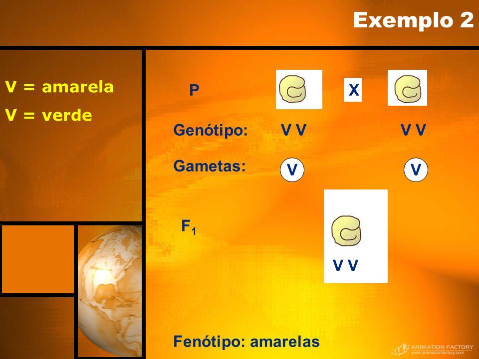 P Fenótipo: amarelas Gametas: VV Genótipo:V F1F1 X Exemplo 2 V = amarela V = verde