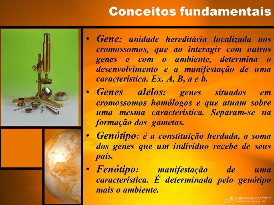 Conceitos fundamentais Gene : unidade hereditária localizada nos cromossomos, que ao interagir com outros genes e com o ambiente, determina o desenvol