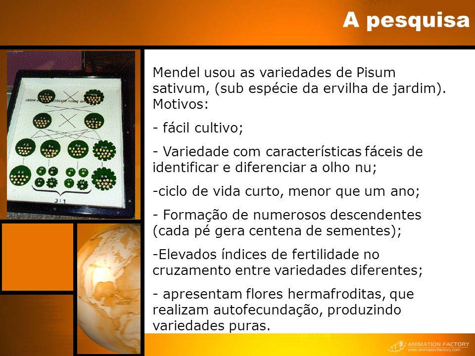 A pesquisa Mendel usou as variedades de Pisum sativum, (sub espécie da ervilha de jardim). Motivos: - fácil cultivo; - Variedade com características f