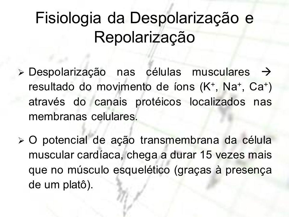Fisiologia da Despolarização e Repolarização Despolarização nas células musculares resultado do movimento de íons (K +, Na +, Ca + ) através do canais