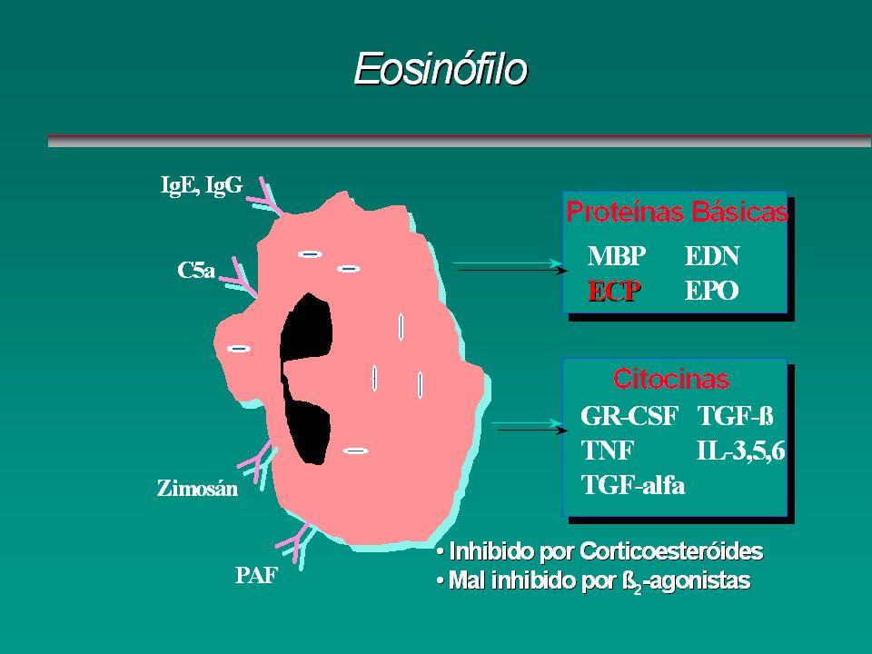 IgE, IgG C5a Zimosán PAF Proteínas Básicas MBPECP EDN EPO Citocinas GR-CSF TNF TGF-alfa TGF-ß IL-3,5,6 Inhibido por CorticoesteroidesInhibido por Cort