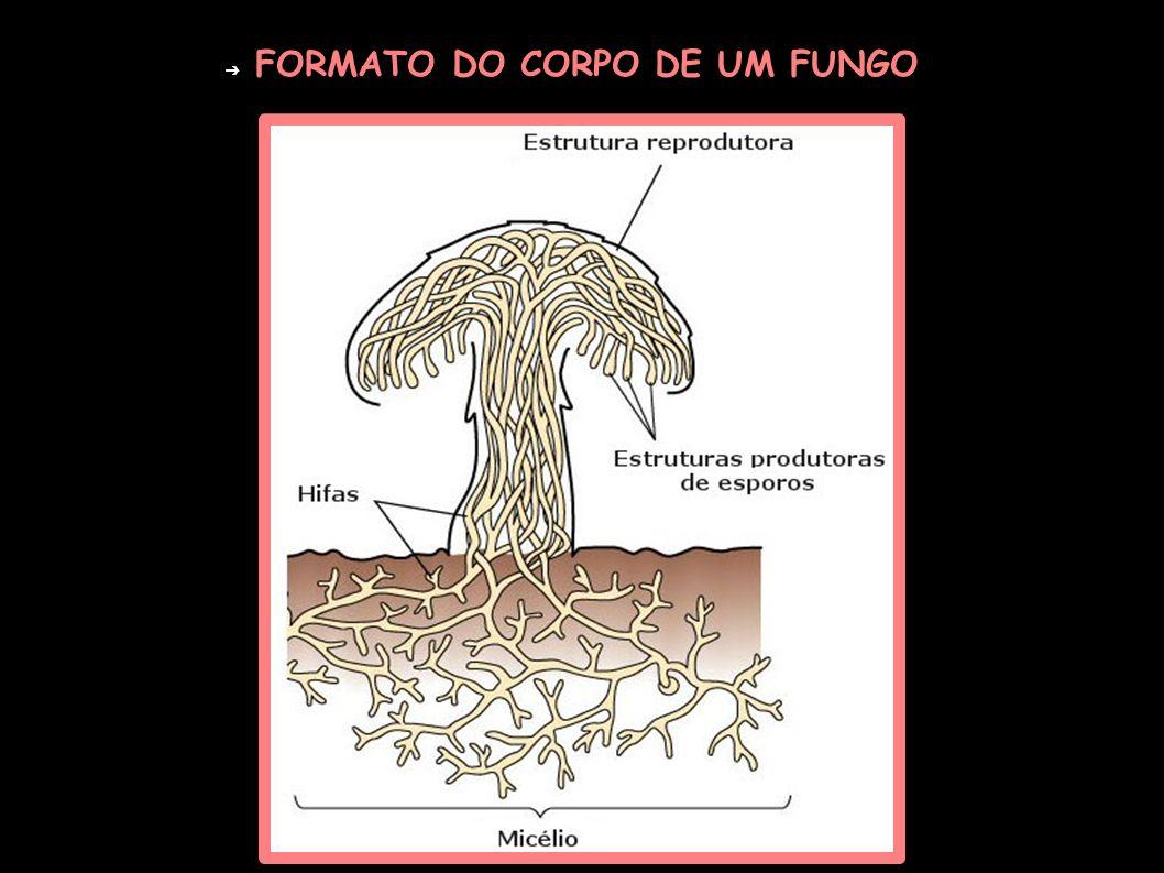 FORMATO DO CORPO DE UM FUNGO