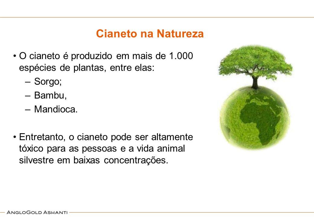 O cianeto é produzido em mais de 1.000 espécies de plantas, entre elas: –Sorgo; –Bambu, –Mandioca. Entretanto, o cianeto pode ser altamente tóxico par