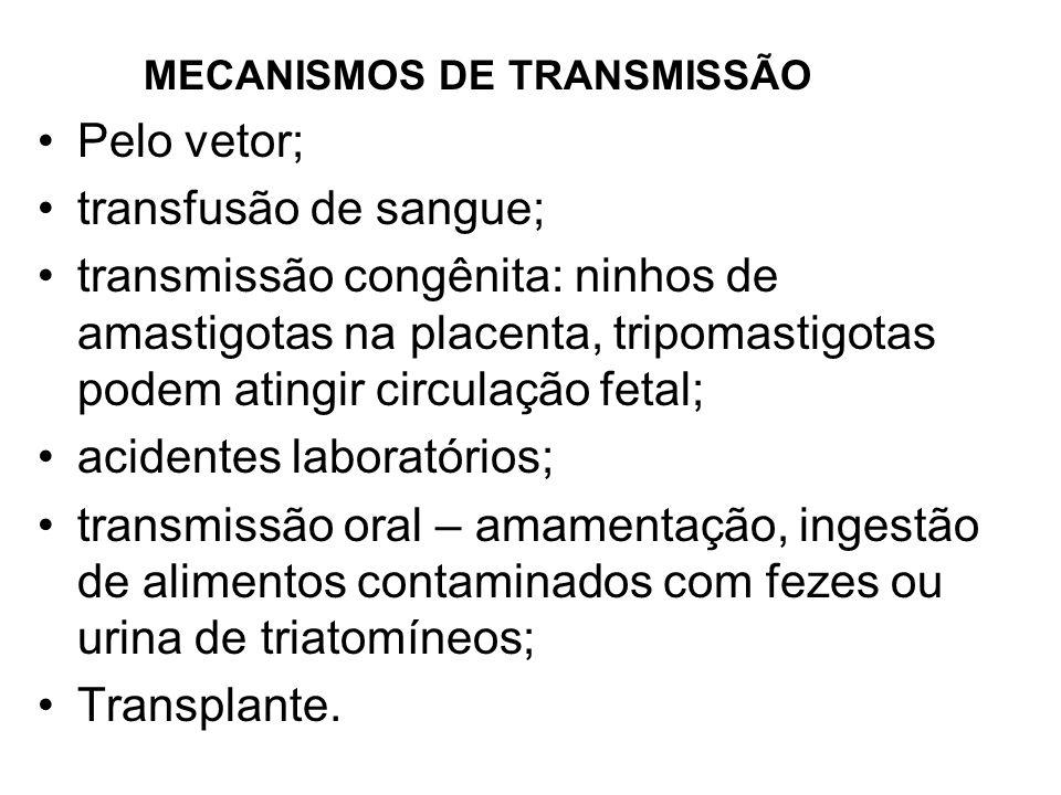 MECANISMOS DE TRANSMISSÃO Pelo vetor; transfusão de sangue; transmissão congênita: ninhos de amastigotas na placenta, tripomastigotas podem atingir ci