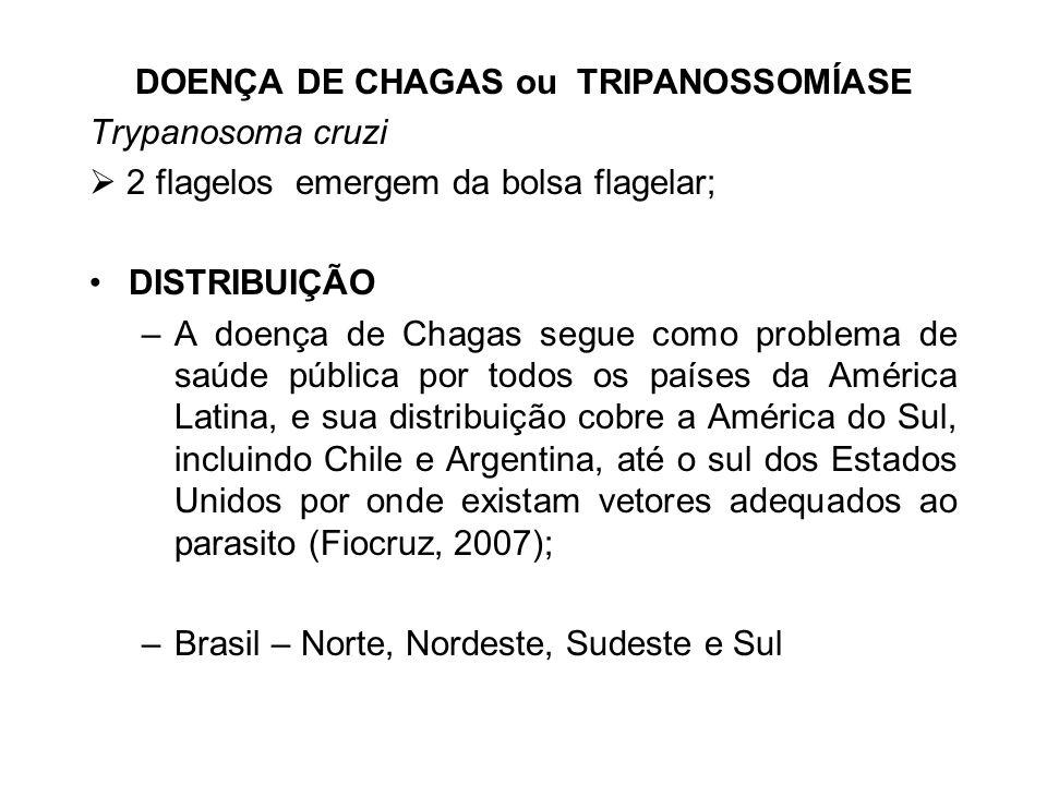 DOENÇA DE CHAGAS ou TRIPANOSSOMÍASE Trypanosoma cruzi 2 flagelos emergem da bolsa flagelar; DISTRIBUIÇÃO –A doença de Chagas segue como problema de sa