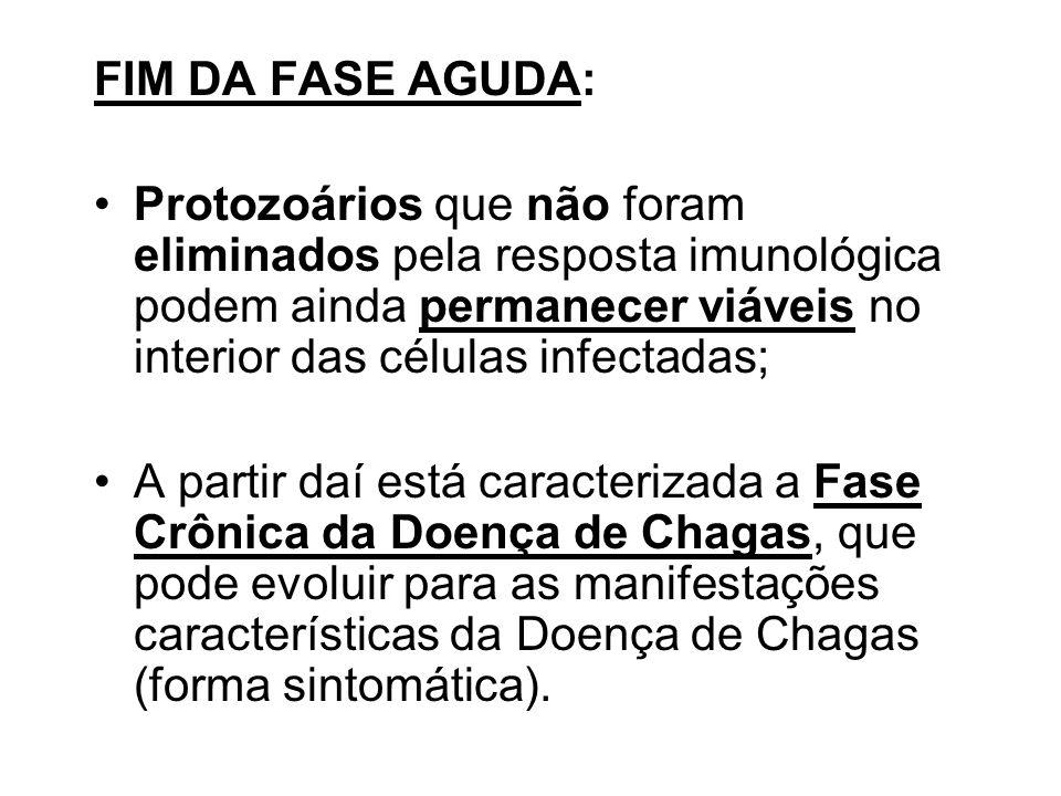 FIM DA FASE AGUDA: Protozoários que não foram eliminados pela resposta imunológica podem ainda permanecer viáveis no interior das células infectadas;