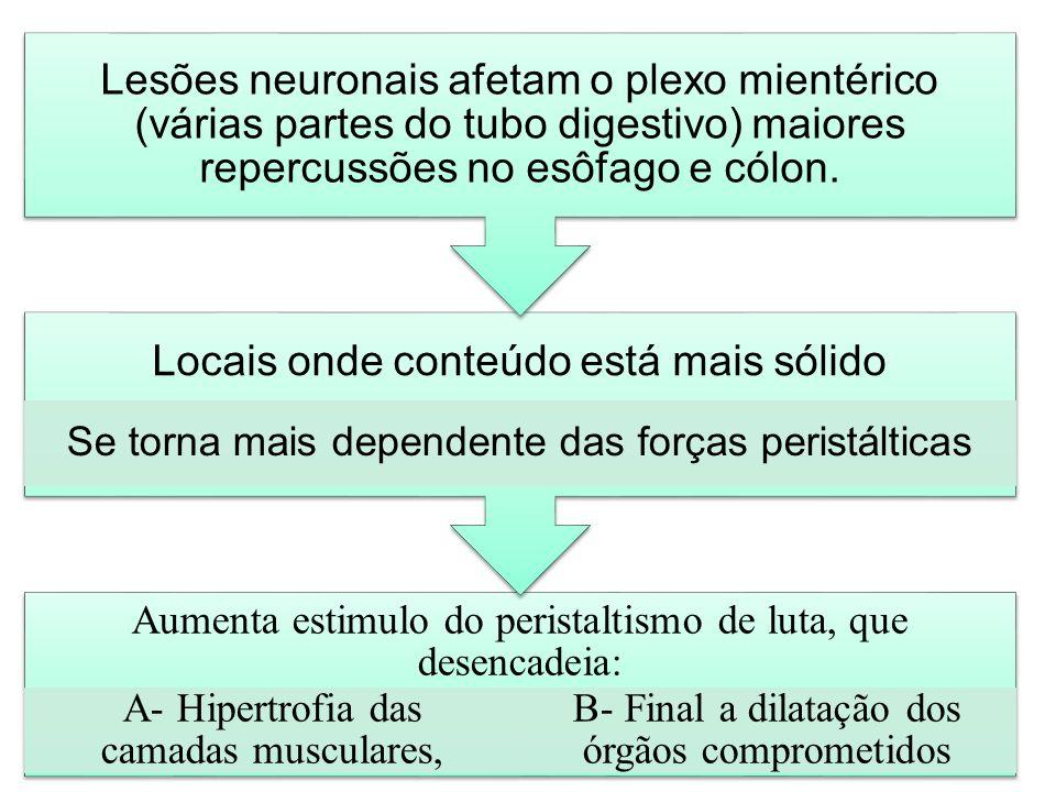Aumenta estimulo do peristaltismo de luta, que desencadeia: A- Hipertrofia das camadas musculares, B- Final a dilatação dos órgãos comprometidos Locai