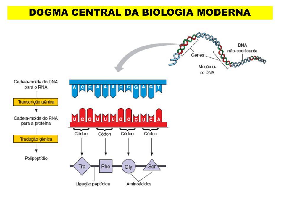 DOGMA CENTRAL DA BIOLOGIA MODERNA