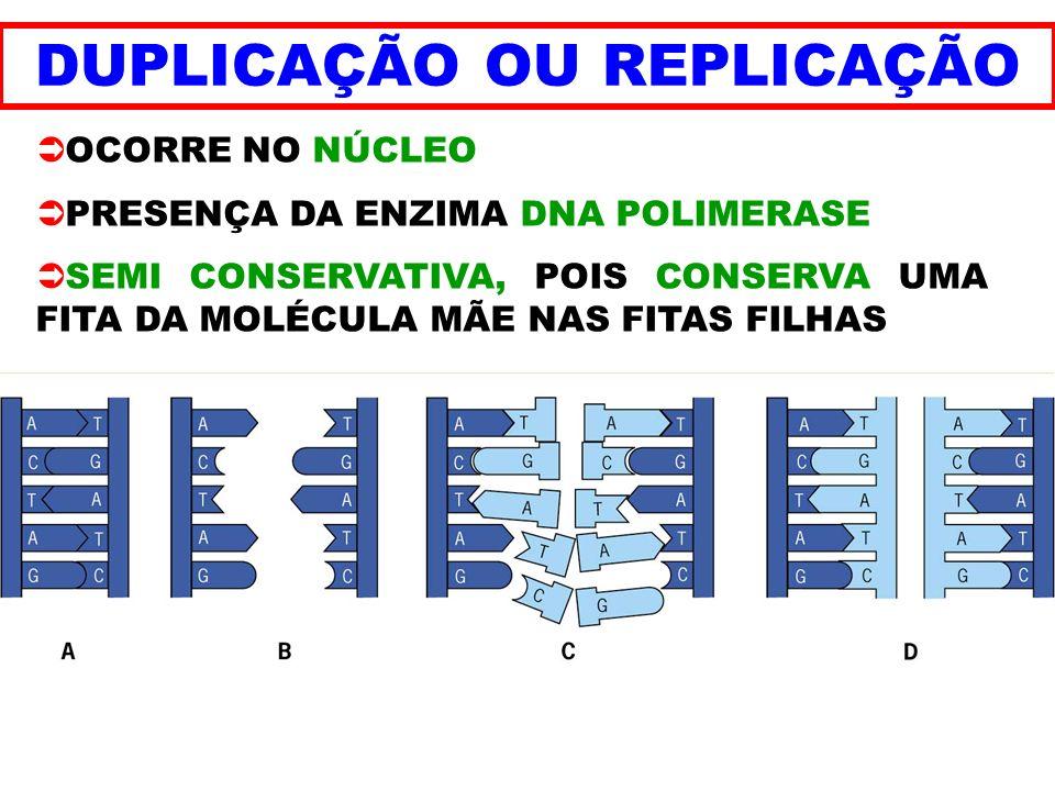 DUPLICAÇÃO OU REPLICAÇÃO OCORRE NO NÚCLEO PRESENÇA DA ENZIMA DNA POLIMERASE SEMI CONSERVATIVA, POIS CONSERVA UMA FITA DA MOLÉCULA MÃE NAS FITAS FILHAS