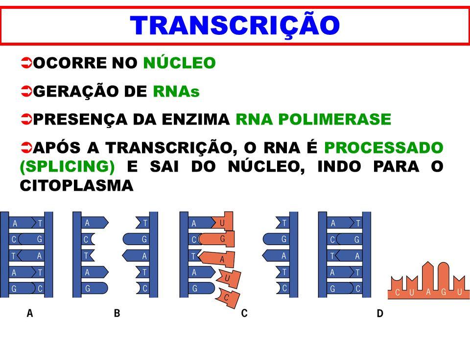 TRANSCRIÇÃO OCORRE NO NÚCLEO GERAÇÃO DE RNAs PRESENÇA DA ENZIMA RNA POLIMERASE APÓS A TRANSCRIÇÃO, O RNA É PROCESSADO (SPLICING) E SAI DO NÚCLEO, INDO