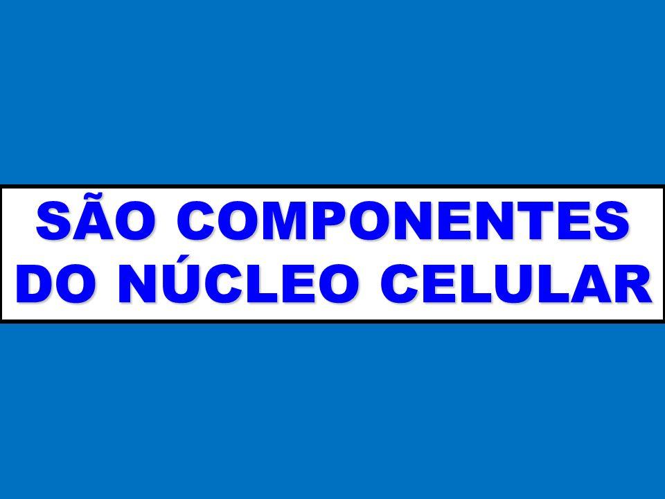 SÃO COMPONENTES DO NÚCLEO CELULAR