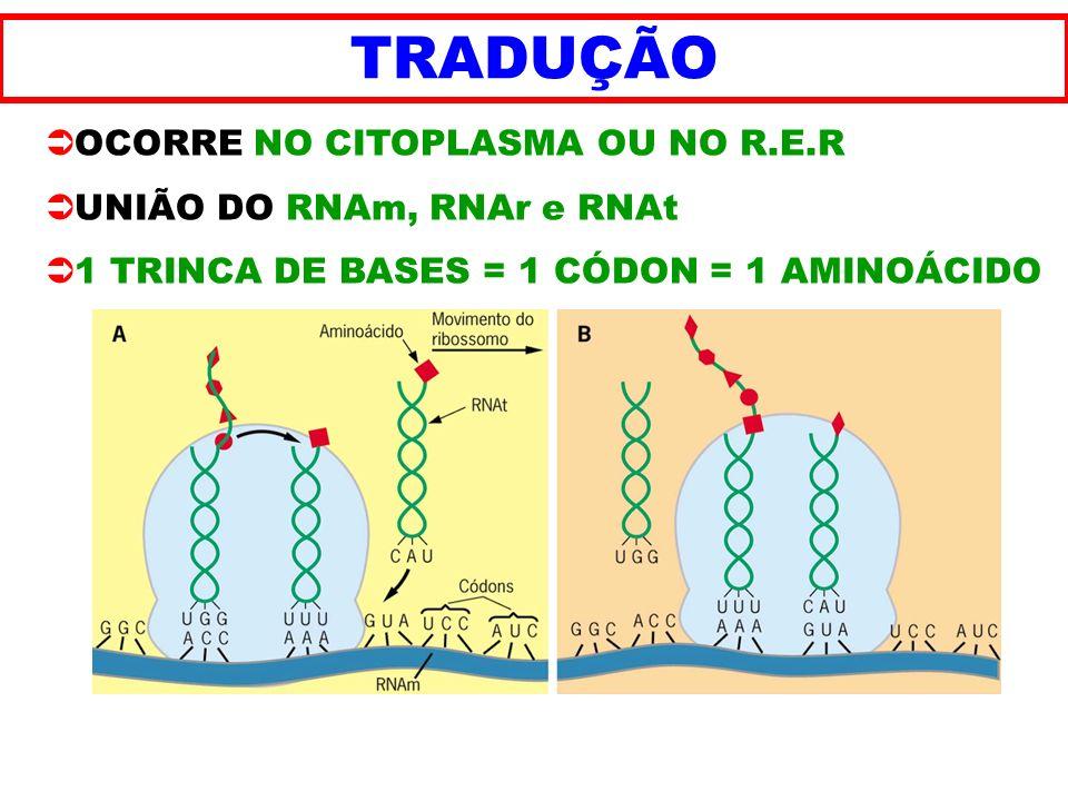 TRADUÇÃO OCORRE NO CITOPLASMA OU NO R.E.R UNIÃO DO RNAm, RNAr e RNAt 1 TRINCA DE BASES = 1 CÓDON = 1 AMINOÁCIDO