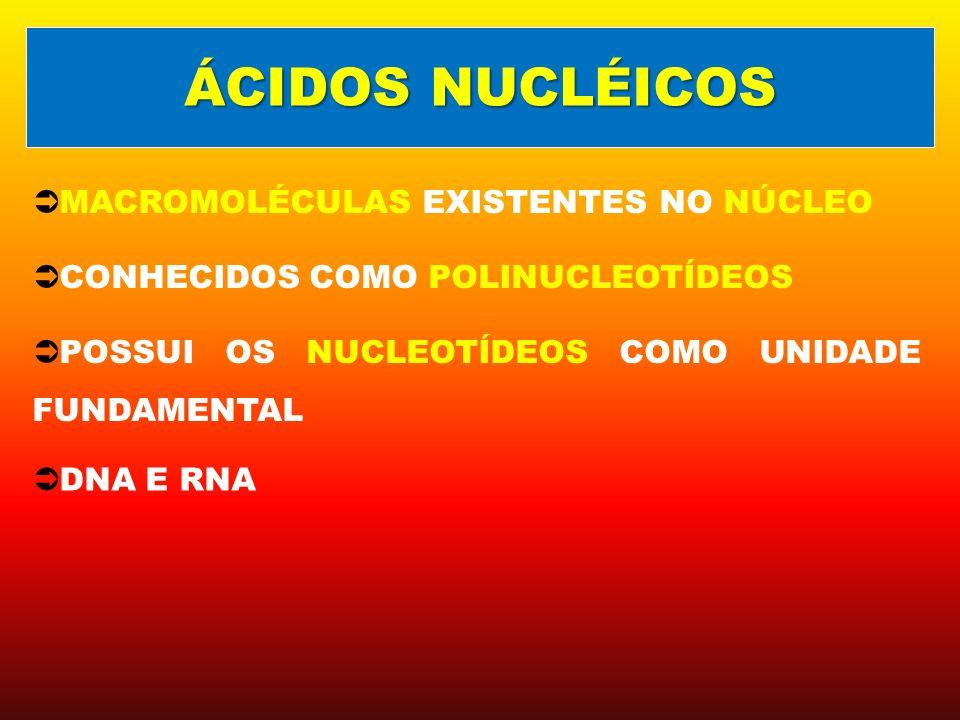 MACROMOLÉCULAS EXISTENTES NO NÚCLEO CONHECIDOS COMO POLINUCLEOTÍDEOS POSSUI OS NUCLEOTÍDEOS COMO UNIDADE FUNDAMENTAL ÁCIDOS NUCLÉICOS DNA E RNA
