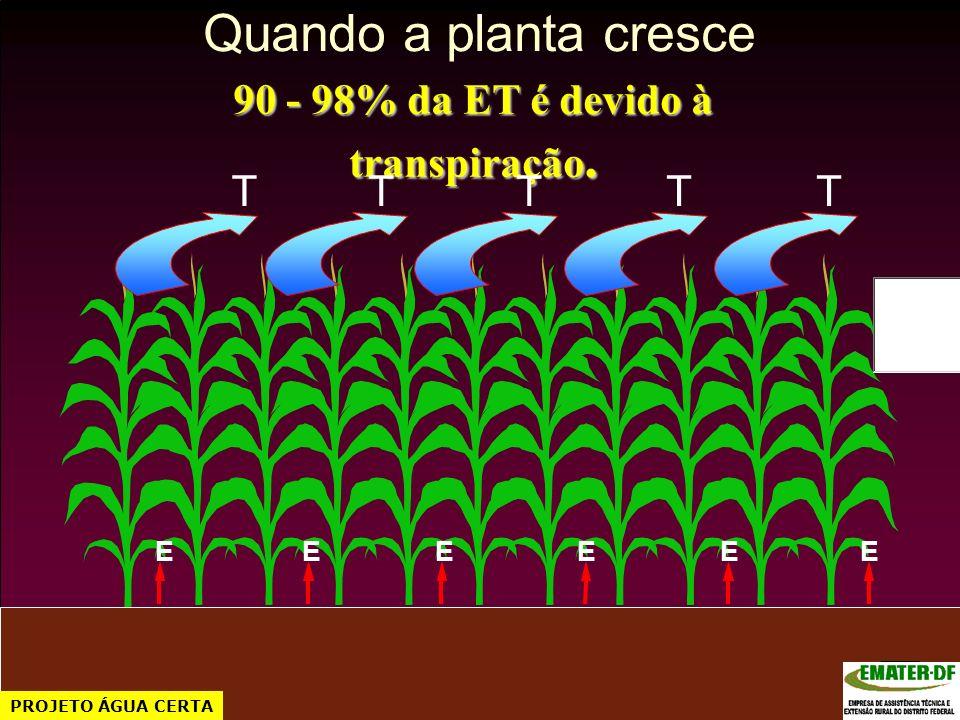 Quando a planta cresce 90 - 98% da ET é devido à transpiração. TTTTT EEEEEE PROJETO ÁGUA CERTA