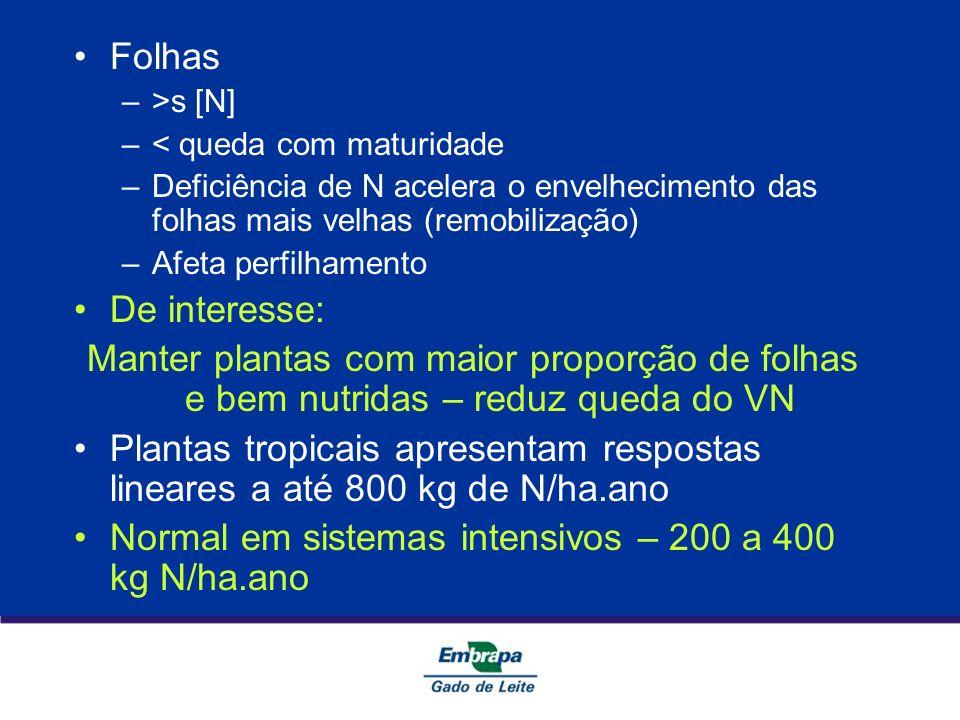 Folhas –>s [N] –< queda com maturidade –Deficiência de N acelera o envelhecimento das folhas mais velhas (remobilização) –Afeta perfilhamento De inter