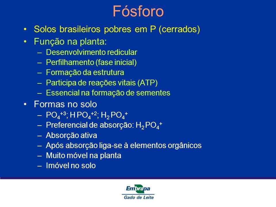 Fósforo Solos brasileiros pobres em P (cerrados) Função na planta: –Desenvolvimento redicular –Perfilhamento (fase inicial) –Formação da estrutura –Pa