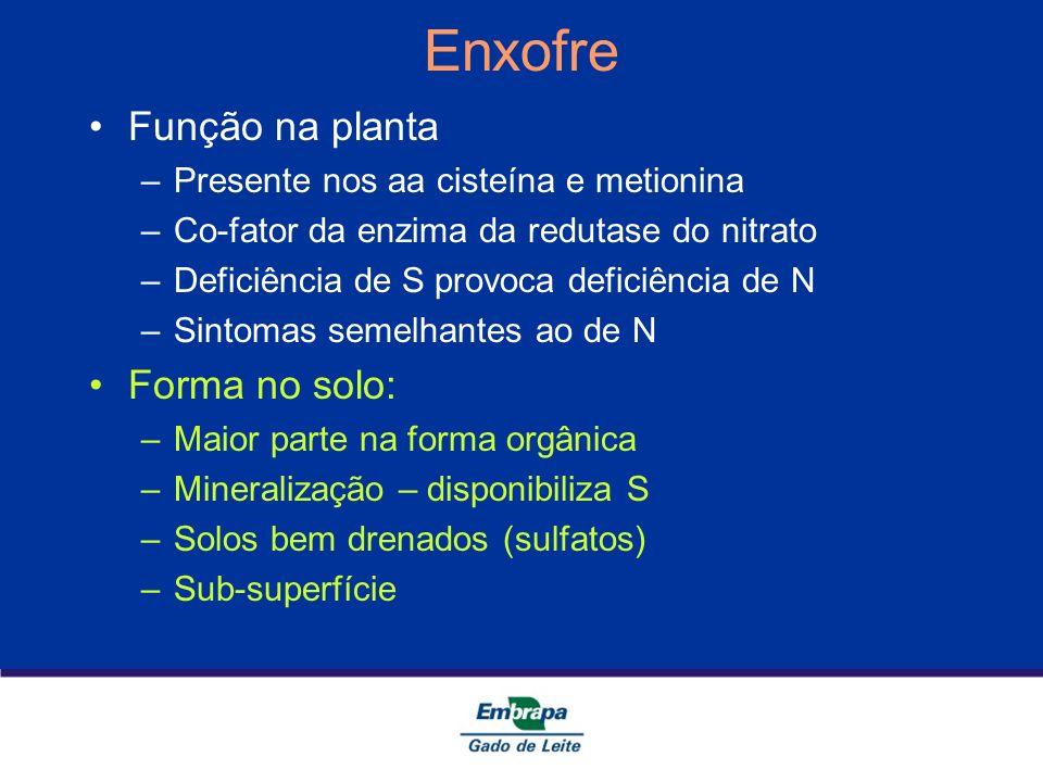 Enxofre Função na planta –Presente nos aa cisteína e metionina –Co-fator da enzima da redutase do nitrato –Deficiência de S provoca deficiência de N –