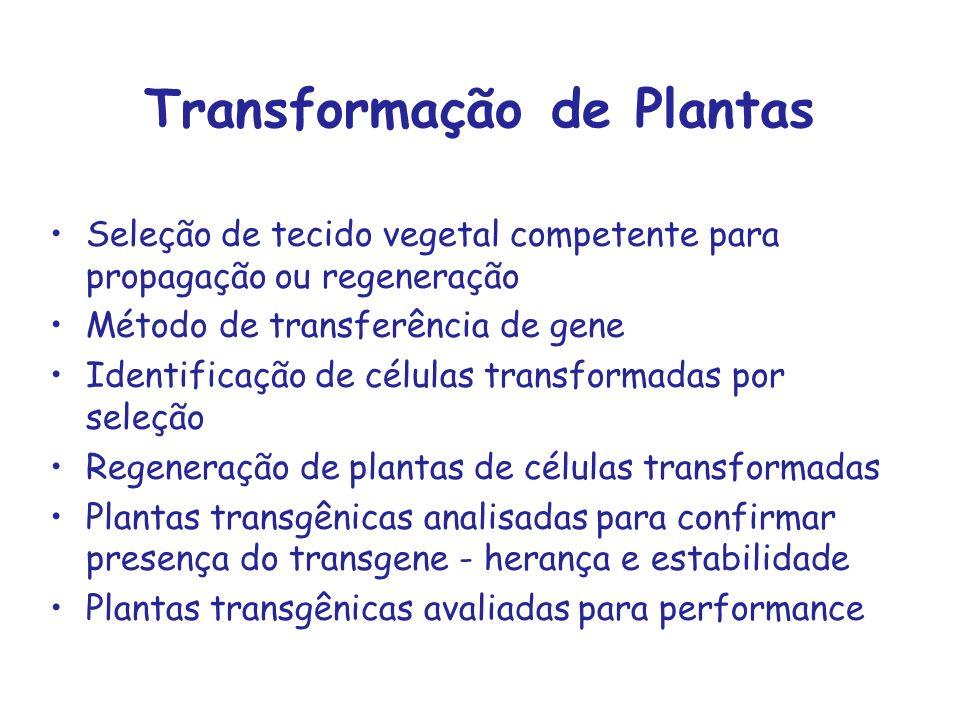 Transformação de Plantas Seleção de tecido vegetal competente para propagação ou regeneração Método de transferência de gene Identificação de células
