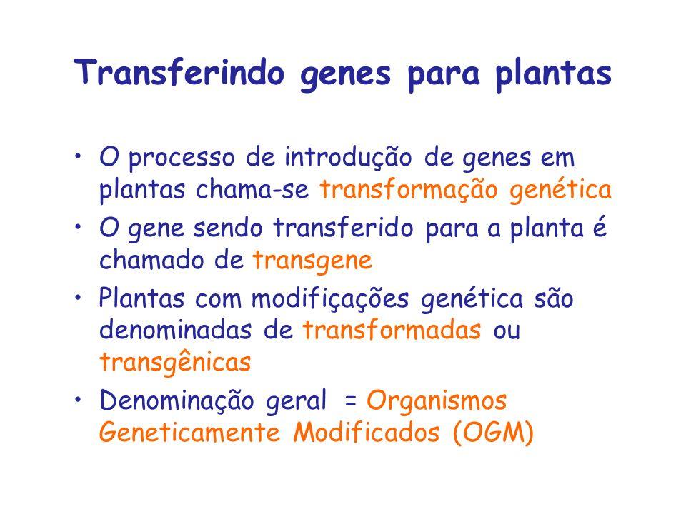 Transferindo genes para plantas O processo de introdução de genes em plantas chama-se transformação genética O gene sendo transferido para a planta é