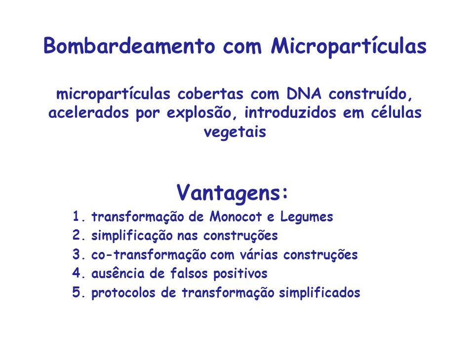 Bombardeamento com Micropartículas micropartículas cobertas com DNA construído, acelerados por explosão, introduzidos em células vegetais Vantagens: 1