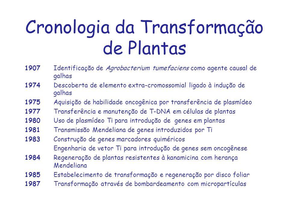 Cronologia da Transformação de Plantas 1907Identificação de Agrobacterium tumefaciens como agente causal de galhas 1974Descoberta de elemento extra-cr
