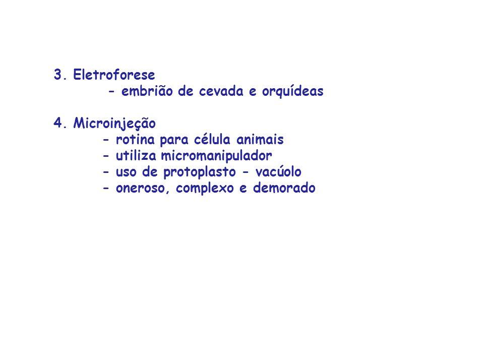 3. Eletroforese - embrião de cevada e orquídeas 4. Microinjeção - rotina para célula animais - utiliza micromanipulador - uso de protoplasto - vacúolo