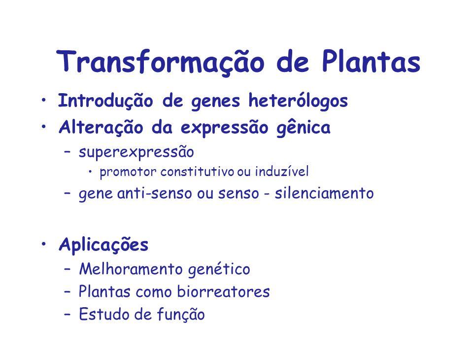Transformação de Plantas Introdução de genes heterólogos Alteração da expressão gênica –superexpressão promotor constitutivo ou induzível –gene anti-s