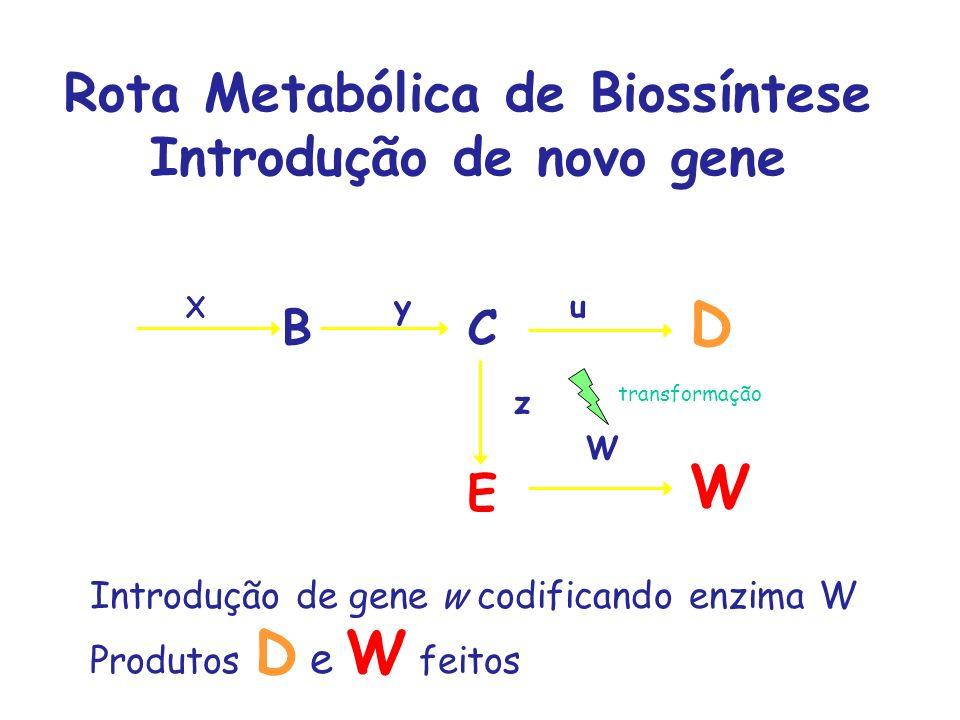Rota Metabólica de Biossíntese Introdução de novo gene ABC D X yu E z Introdução de gene w codificando enzima W Produtos D e W feitos W W transformaçã