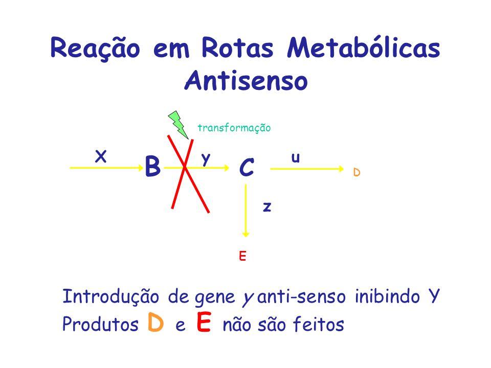 Reação em Rotas Metabólicas Antisenso A B C D Xyu E z Introdução de gene y anti-senso inibindo Y Produtos D e E não são feitos transformação