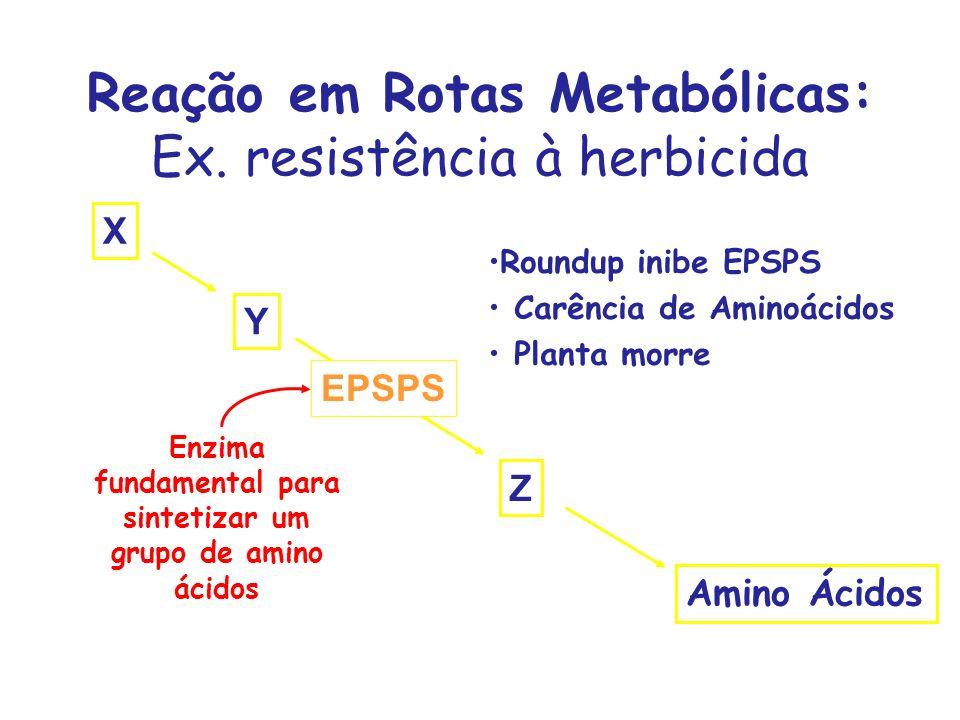 Reação em Rotas Metabólicas: Ex. resistência à herbicida X Y Z Amino Ácidos EPSPS Enzima fundamental para sintetizar um grupo de amino ácidos Roundup