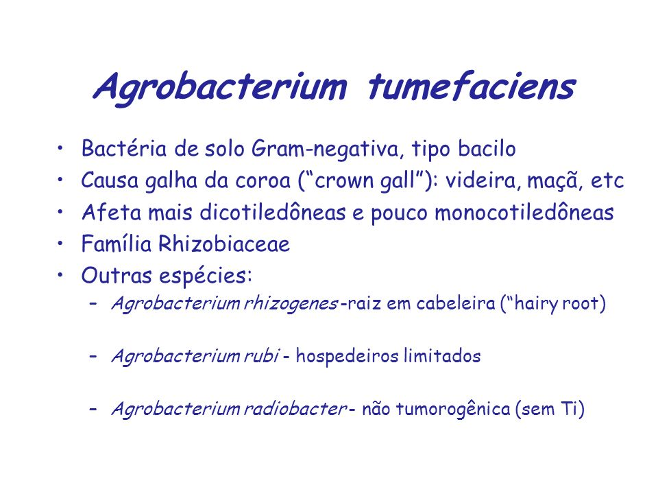 Agrobacterium tumefaciens Bactéria de solo Gram-negativa, tipo bacilo Causa galha da coroa (crown gall): videira, maçã, etc Afeta mais dicotiledôneas