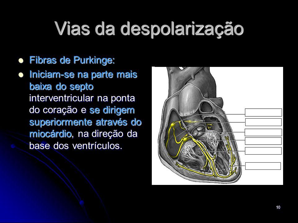 10 Vias da despolarização Fibras de Purkinge: Fibras de Purkinge: Iniciam-se na parte mais baixa do septo interventricular na ponta do coração e se di
