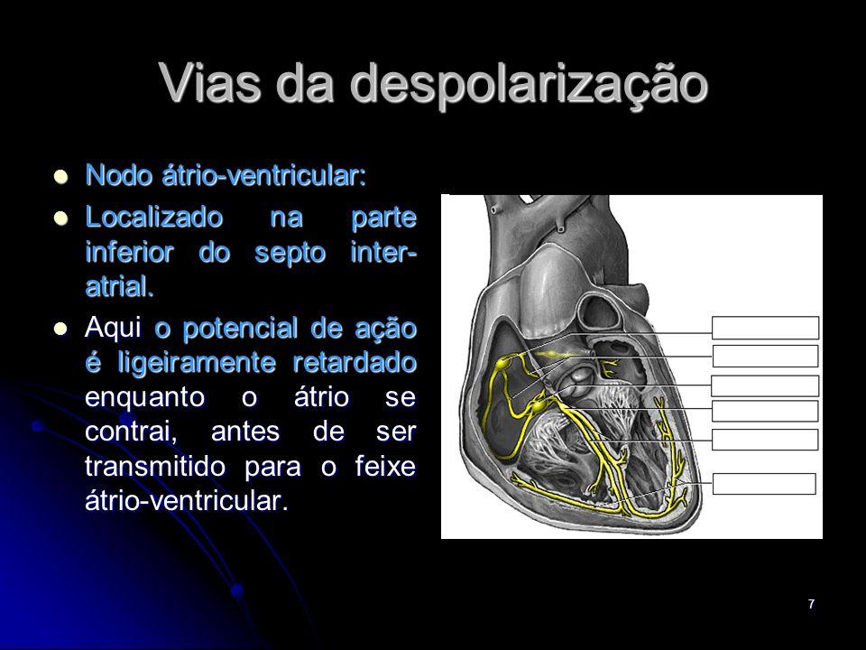 7 Vias da despolarização Nodo átrio-ventricular: Nodo átrio-ventricular: Localizado na parte inferior do septo inter- atrial. Localizado na parte infe