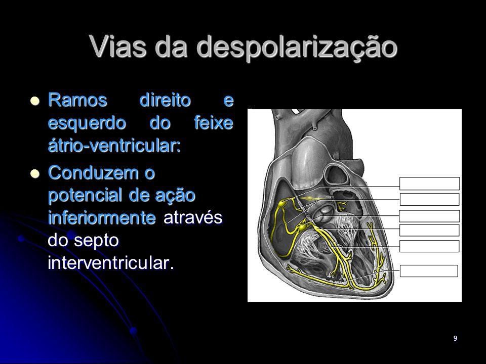 9 Vias da despolarização Ramos direito e esquerdo do feixe átrio-ventricular: Ramos direito e esquerdo do feixe átrio-ventricular: Conduzem o potencia