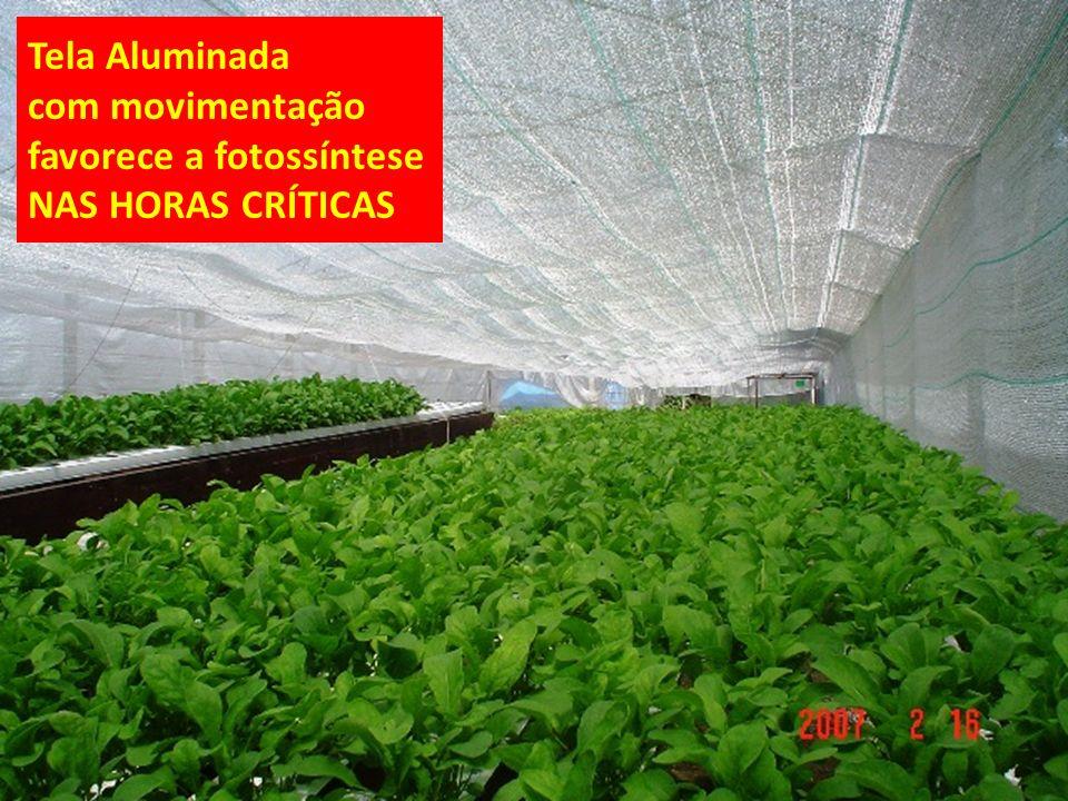Tela Aluminada com movimentação favorece a fotossíntese NAS HORAS CRÍTICAS