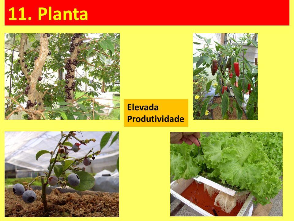 11. Planta Elevada Produtividade