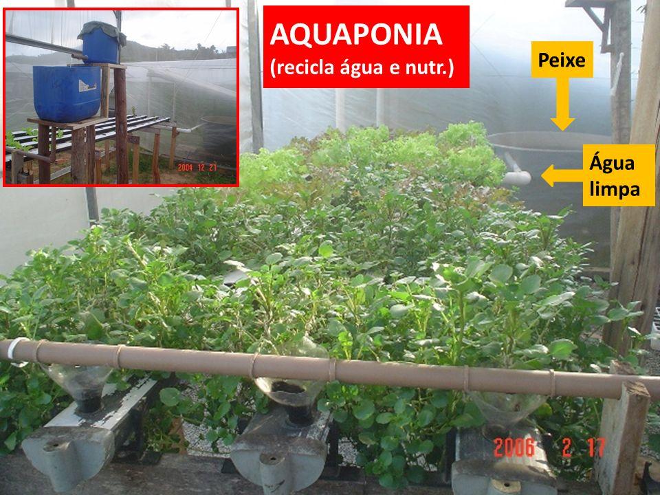 AQUAPONIA (recicla água e nutr.) Água limpa Peixe
