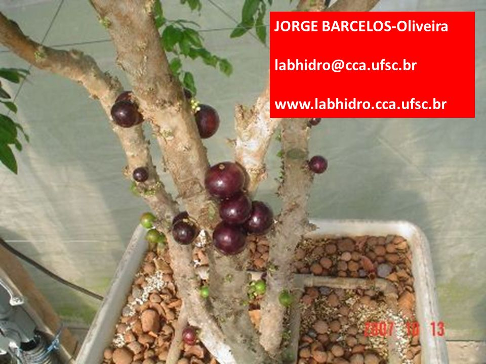 JORGE BARCELOS-Oliveira labhidro@cca.ufsc.br www.labhidro.cca.ufsc.br