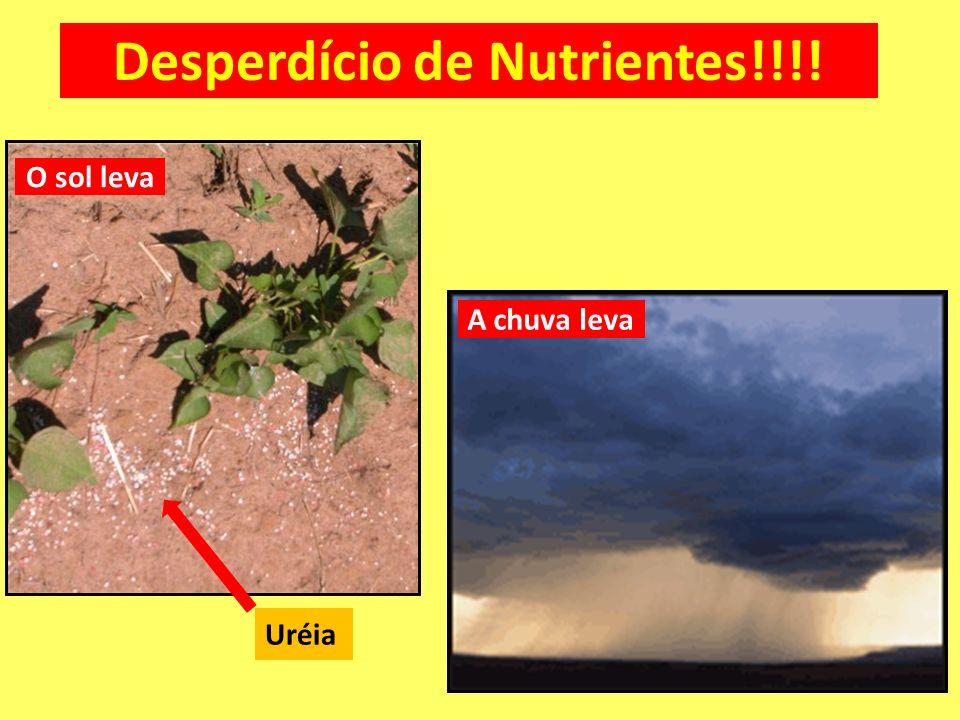 O sol leva A chuva leva Desperdício de Nutrientes!!!! Uréia
