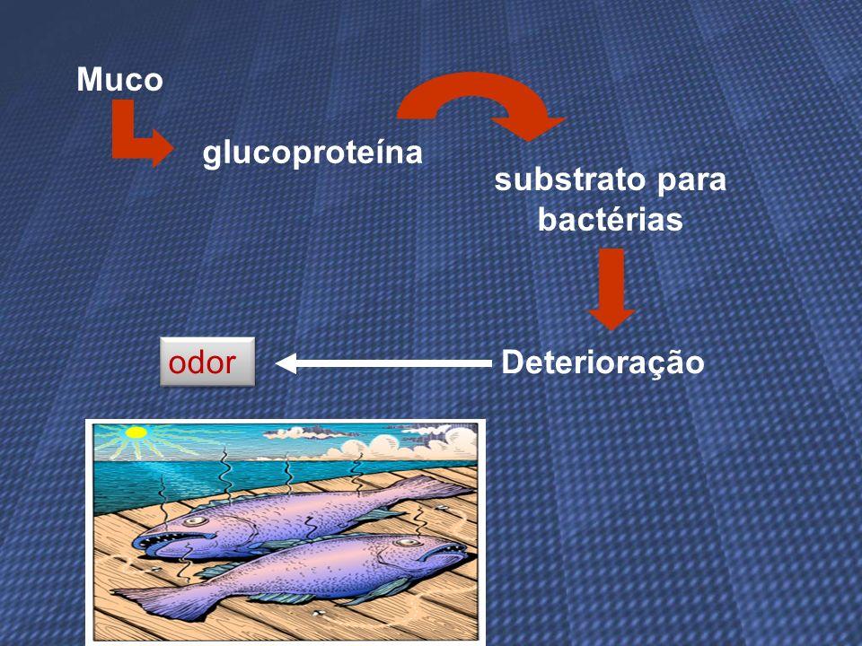 Muco glucoproteína odor substrato para bactérias Deterioração