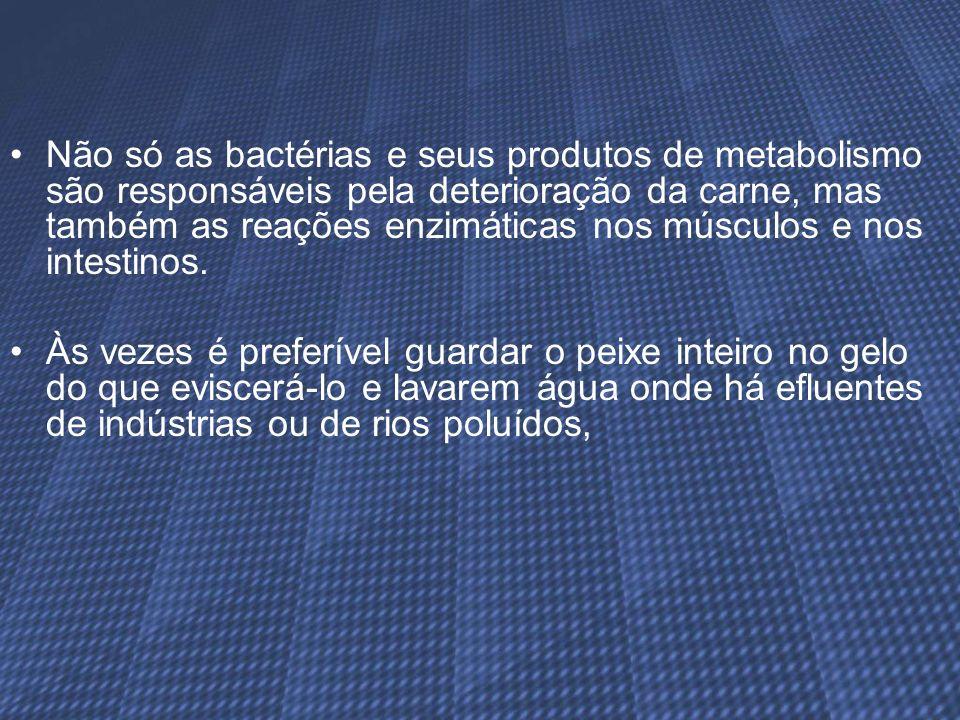Não só as bactérias e seus produtos de metabolismo são responsáveis pela deterioração da carne, mas também as reações enzimáticas nos músculos e nos i