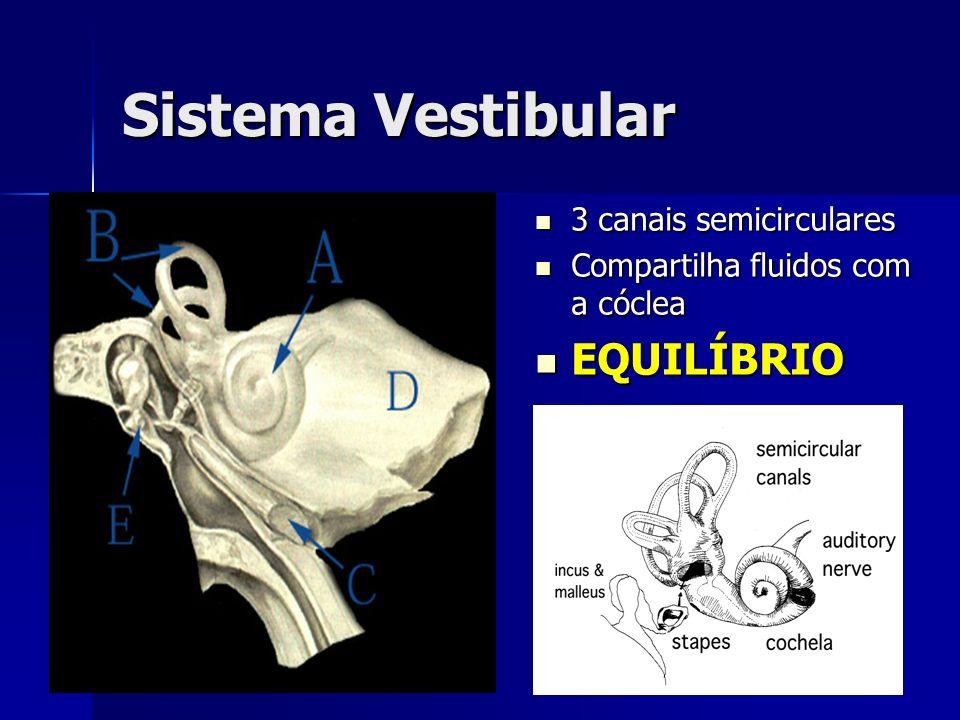 Sistema Vestibular 3 canais semicirculares 3 canais semicirculares Compartilha fluidos com a cóclea Compartilha fluidos com a cóclea EQUILÍBRIO EQUILÍ