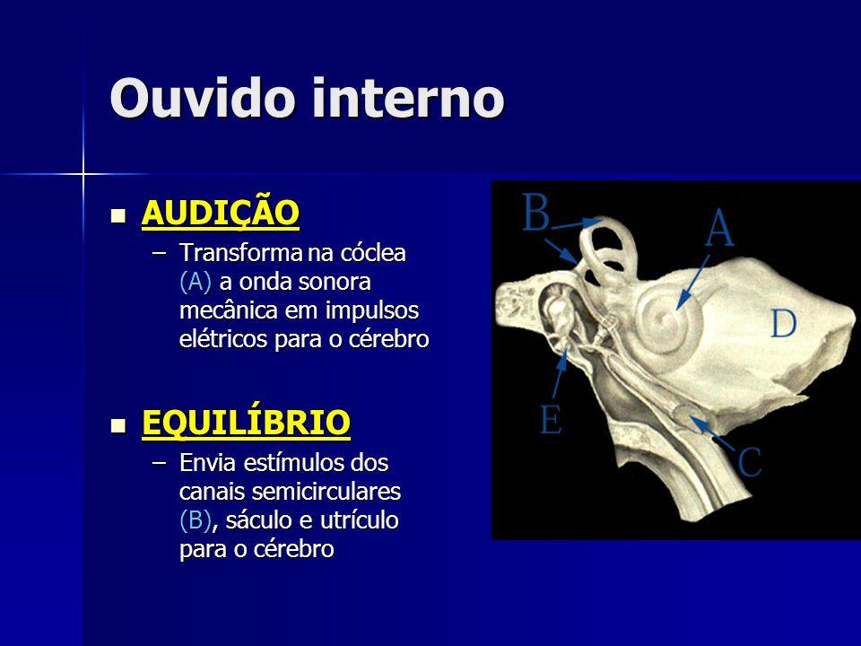 Ouvido interno AUDIÇÃO AUDIÇÃO –Transforma na cóclea (A) a onda sonora mecânica em impulsos elétricos para o cérebro EQUILÍBRIO EQUILÍBRIO –Envia estí