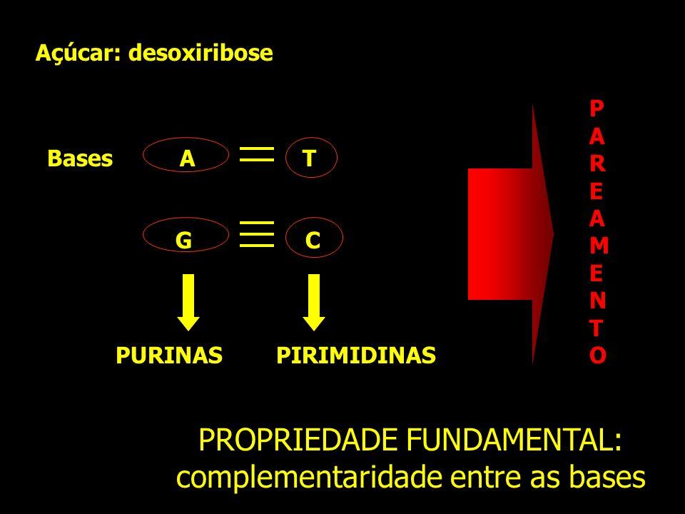 Bases A T G C PURINAS PIRIMIDINAS PAREAMENTOPAREAMENTO Açúcar: desoxiribose PROPRIEDADE FUNDAMENTAL: complementaridade entre as bases