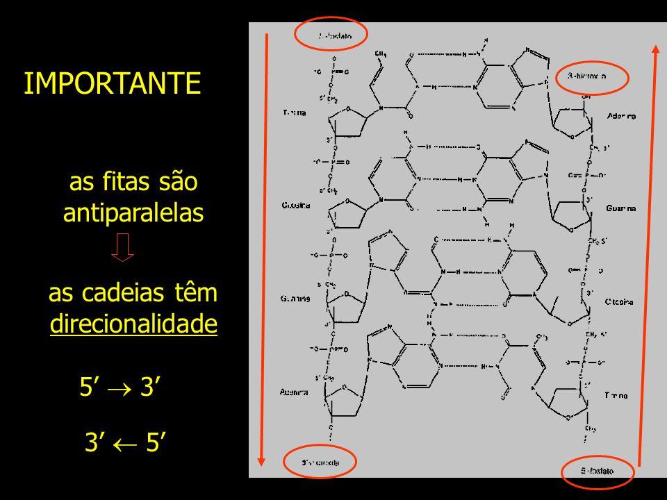 IMPORTANTE as fitas são antiparalelas as cadeias têm direcionalidade 5 3 3 5