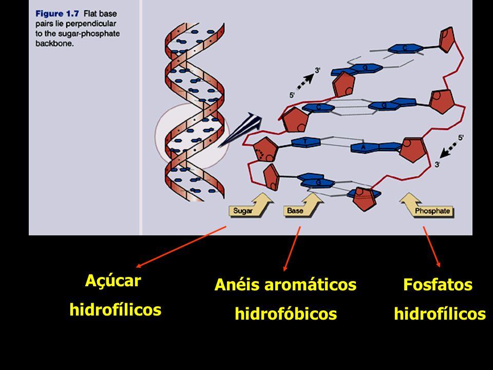 Anéis aromáticos hidrofóbicos Açúcar hidrofílicos Fosfatos hidrofílicos