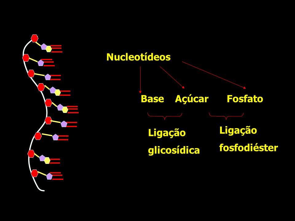 Ligação glicosídica Ligação fosfodiéster Nucleotídeos FosfatoBaseAçúcar