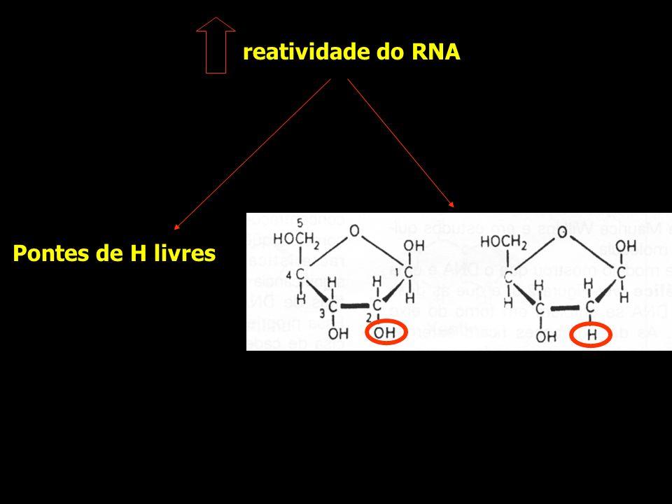 reatividade do RNA Pontes de H livres