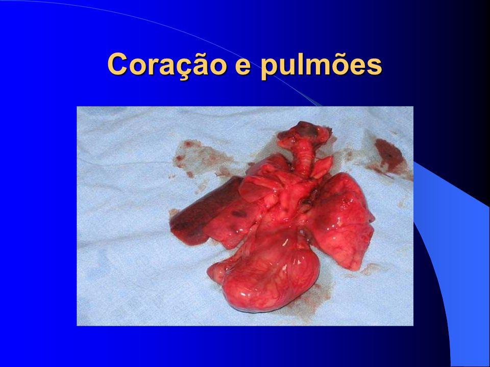 Coração e pulmões