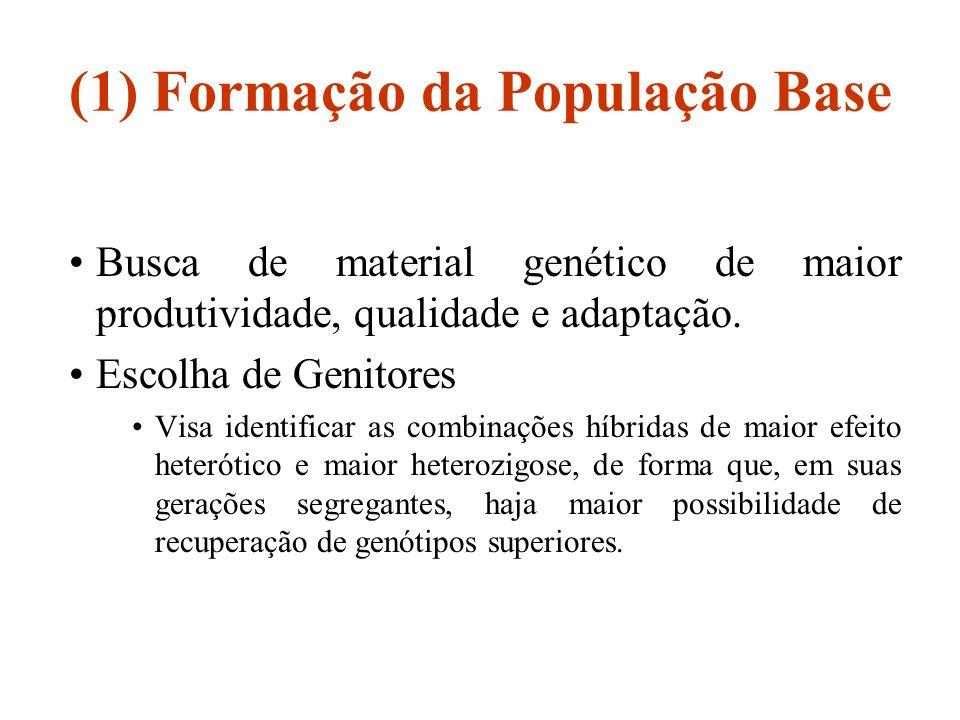 (1) Formação da População Base Busca de material genético de maior produtividade, qualidade e adaptação. Escolha de Genitores Visa identificar as comb